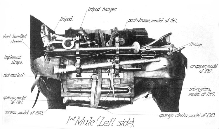 1st Mule (Left Side)