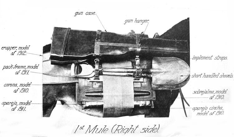 1st Mule (Right Side)